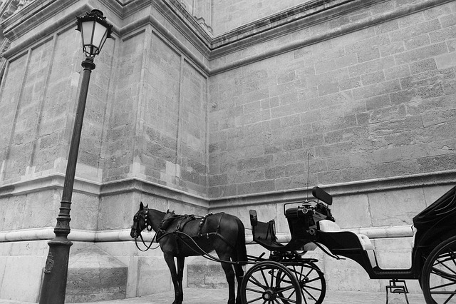 horse-carriage-406809_640
